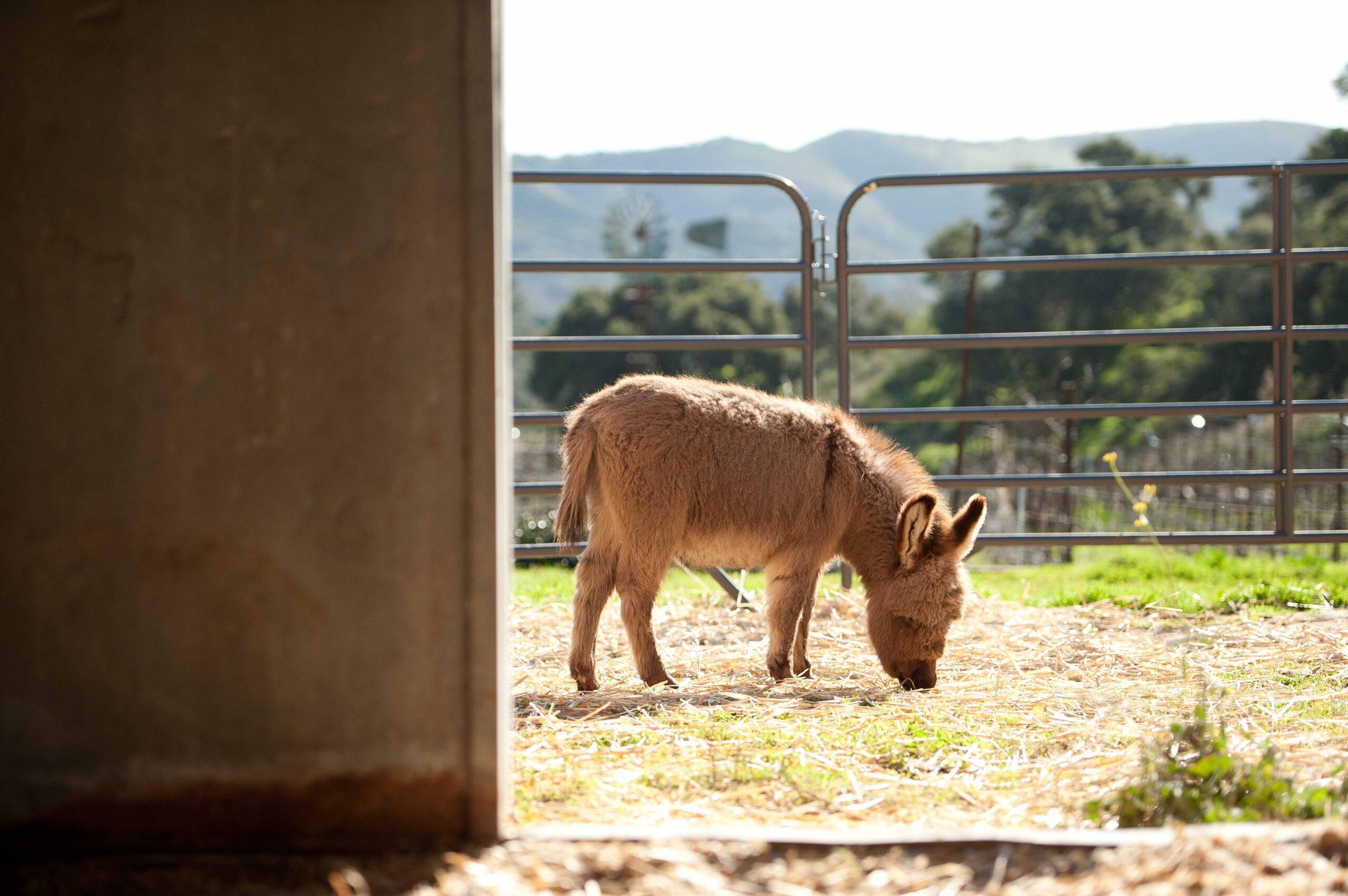 Hidden Canyon Ranch + Farm